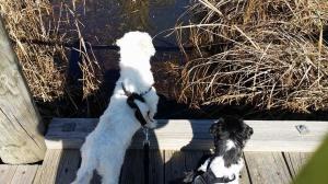 walkinthedogs